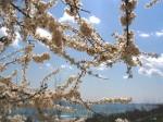 oblaka123 150x112 The Scenery Begins (картинки). Факты биографии Yiruma.