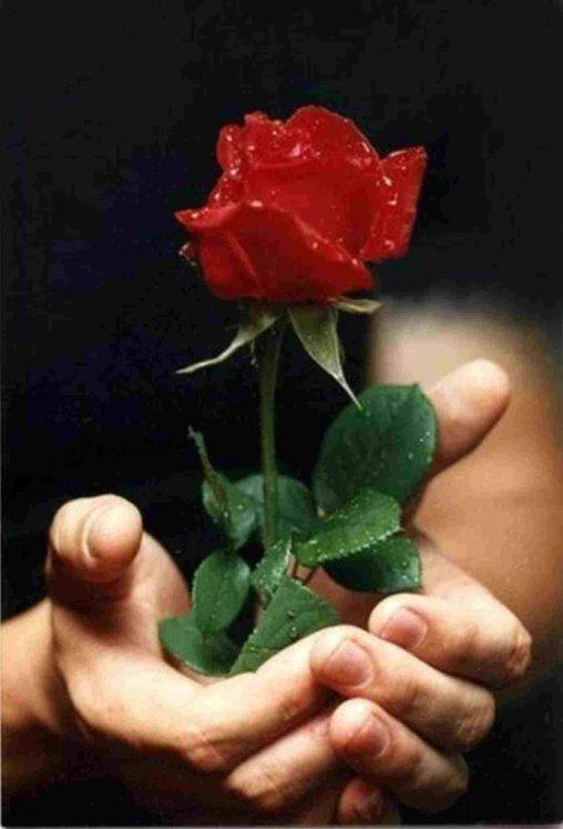 roza dar Почём свобода для музыканта